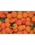 Confiture d'Abricots de Provence