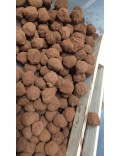 Fruits secs truffés